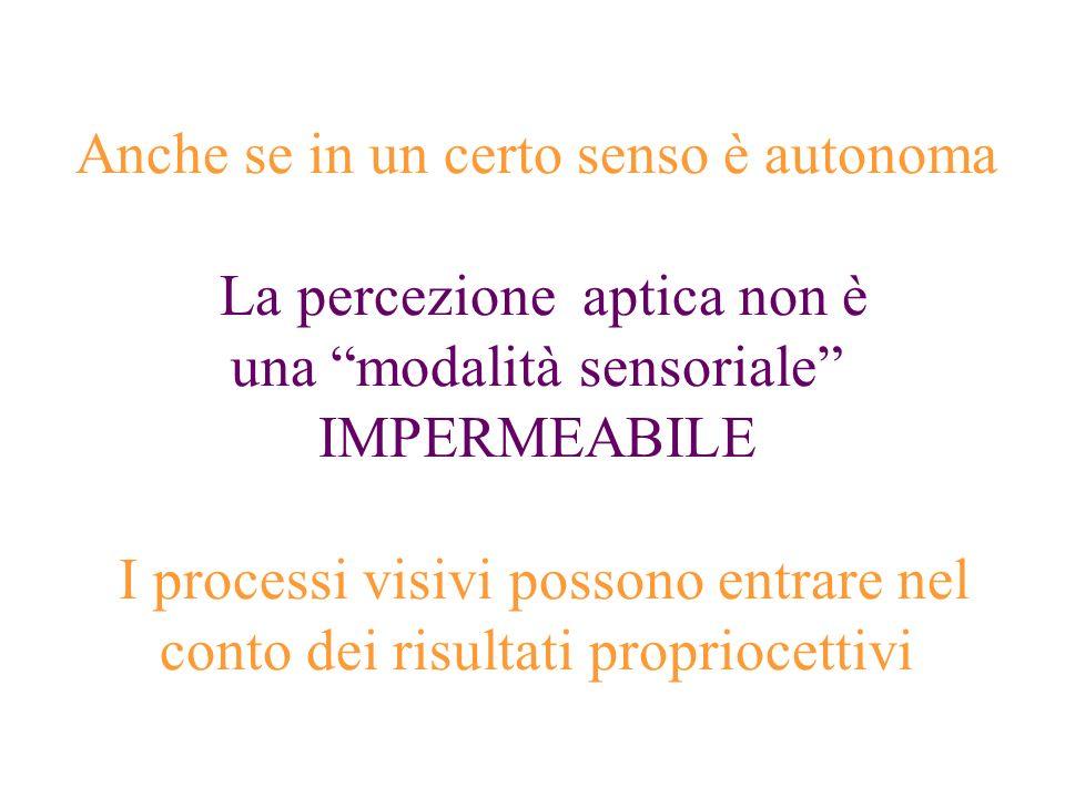 Anche se in un certo senso è autonoma La percezione aptica non è una modalità sensoriale IMPERMEABILE I processi visivi possono entrare nel conto dei