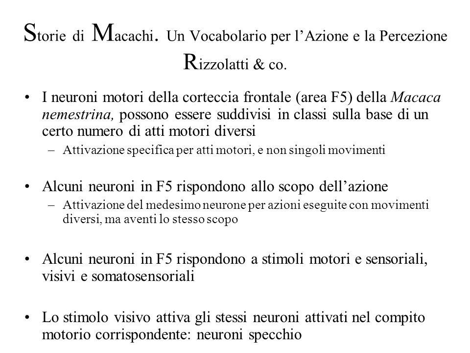 S torie di M acachi. Un Vocabolario per lAzione e la Percezione R izzolatti & co. I neuroni motori della corteccia frontale (area F5) della Macaca nem