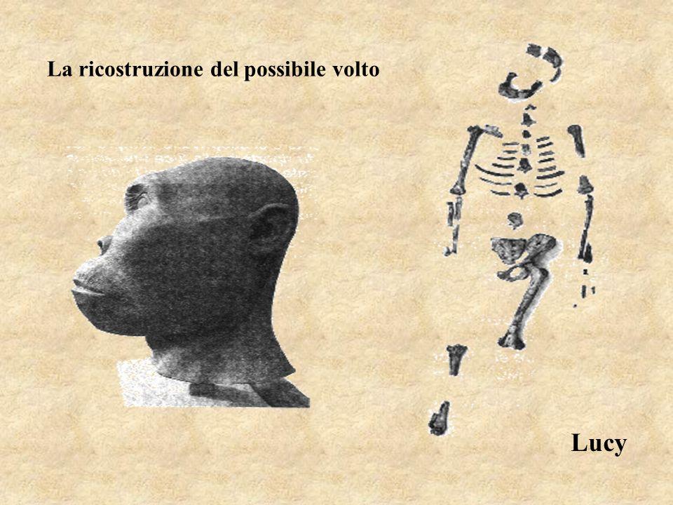 Lucy La ricostruzione del possibile volto