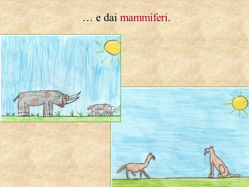 … e dai mammiferi.