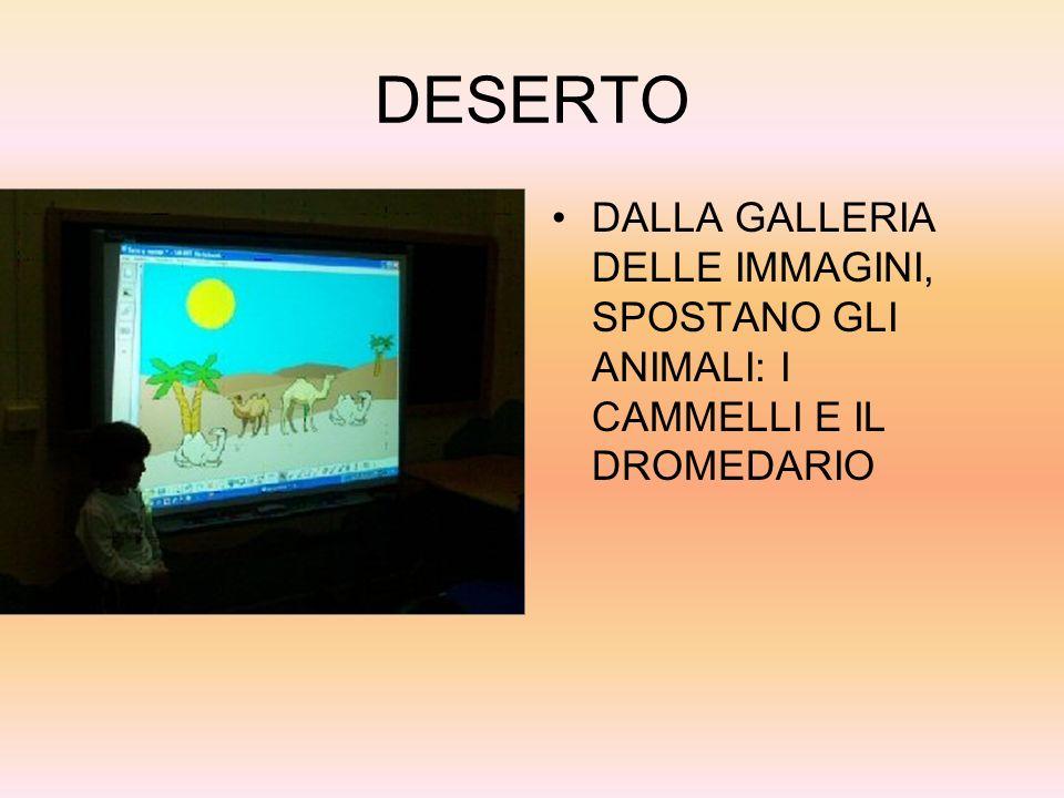 DESERTO DALLA GALLERIA DELLE IMMAGINI, SPOSTANO GLI ANIMALI: I CAMMELLI E IL DROMEDARIO