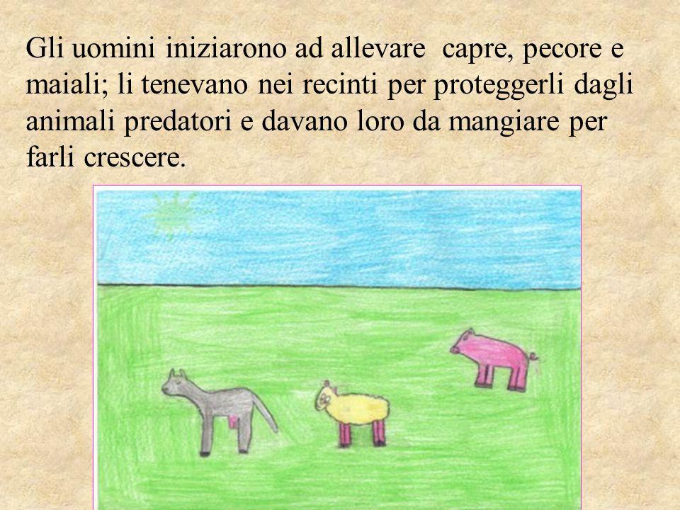 Gli uomini iniziarono ad allevare capre, pecore e maiali; li tenevano nei recinti per proteggerli dagli animali predatori e davano loro da mangiare pe