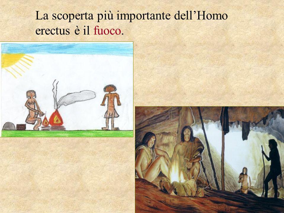 La scoperta più importante dellHomo erectus è il fuoco.