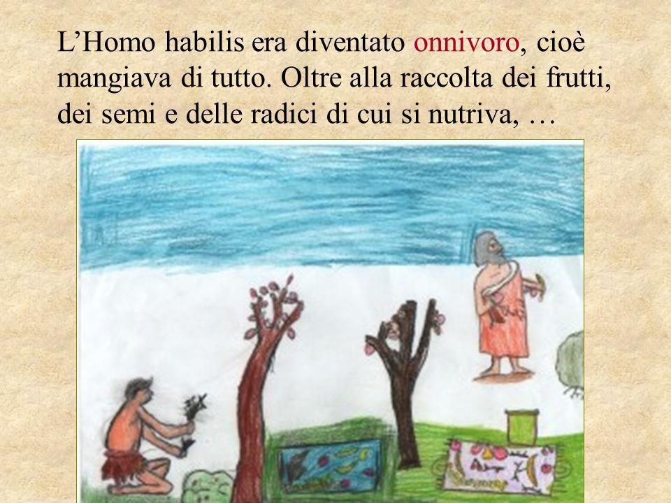 LHomo habilis era diventato onnivoro, cioè mangiava di tutto. Oltre alla raccolta dei frutti, dei semi e delle radici di cui si nutriva, …