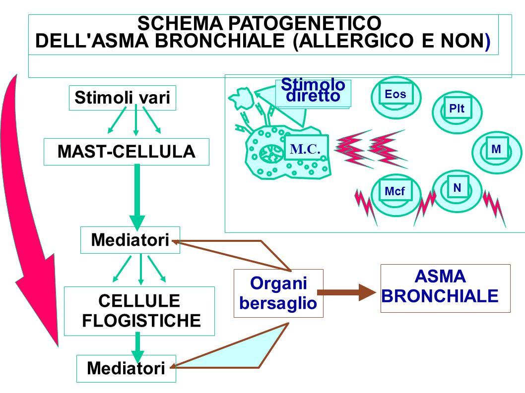 Organi bersaglio ASMA BRONCHIALE Stimoli vari MAST-CELLULA Mediatori CELLULE FLOGISTICHE Mediatori SCHEMA PATOGENETICO DELL'ASMA BRONCHIALE (ALLERGICO