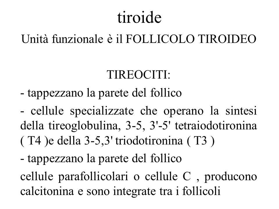 tiroide Unità funzionale è il FOLLICOLO TIROIDEO TIREOCITI: - tappezzano la parete del follico - cellule specializzate che operano la sintesi della ti