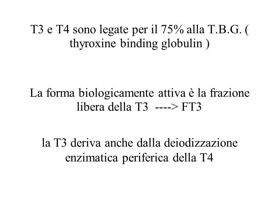 T3 e T4 sono legate per il 75% alla T.B.G. ( thyroxine binding globulin ) La forma biologicamente attiva è la frazione libera della T3 ----> FT3 la T3