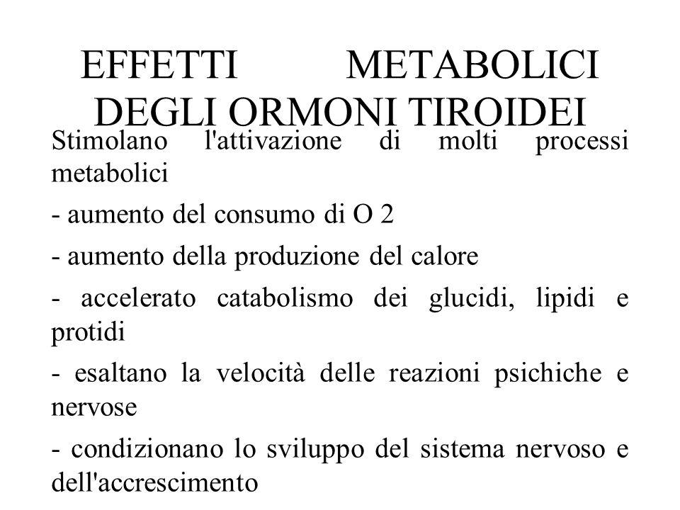 EFFETTI METABOLICI DEGLI ORMONI TIROIDEI Stimolano l'attivazione di molti processi metabolici - aumento del consumo di O 2 - aumento della produzione