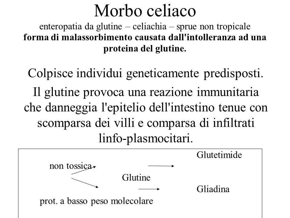 Morbo celiaco enteropatia da glutine – celiachia – sprue non tropicale forma di malassorbimento causata dall'intolleranza ad una proteina del glutine.