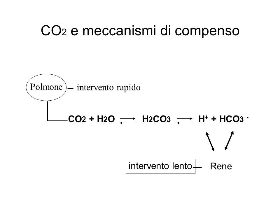 CO 2 e meccanismi di compenso Polmone intervento rapido intervento lento Rene CO 2 + H 2 OH 2 CO 3 H + + HCO 3 -