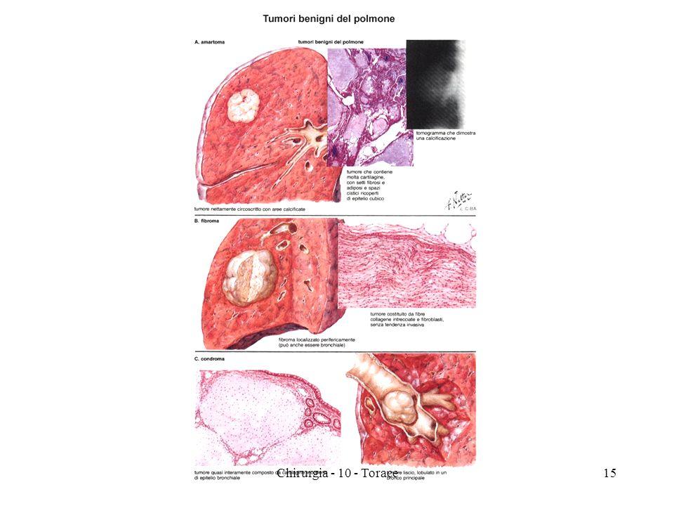 15Chirurgia - 10 - Torace
