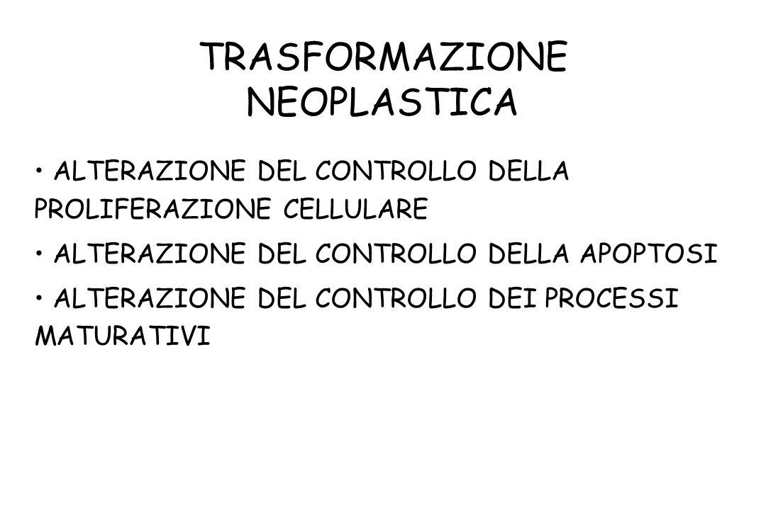 TRASFORMAZIONE NEOPLASTICA ALTERAZIONE DEL CONTROLLO DELLA PROLIFERAZIONE CELLULARE ALTERAZIONE DEL CONTROLLO DELLA APOPTOSI ALTERAZIONE DEL CONTROLLO