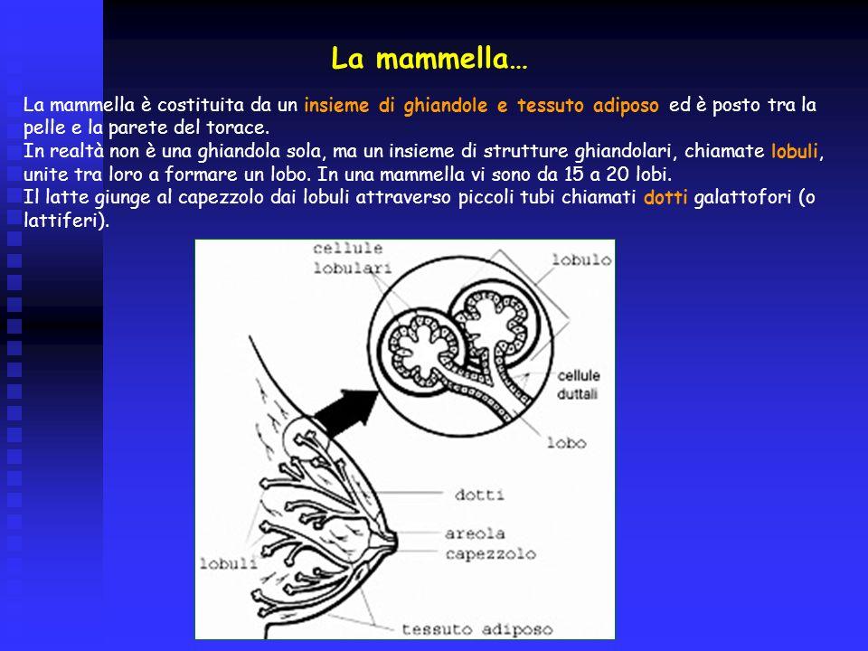 Terapie neoadiuvanti Trovano indicazione in alcuni tumori localmente avanzati (es.