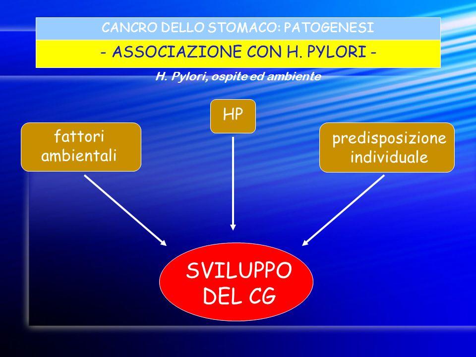 CANCRO DELLO STOMACO: PATOGENESI - ASSOCIAZIONE CON H. PYLORI - SVILUPPO DEL CG predisposizione individuale HP fattori ambientali H. Pylori, ospite ed