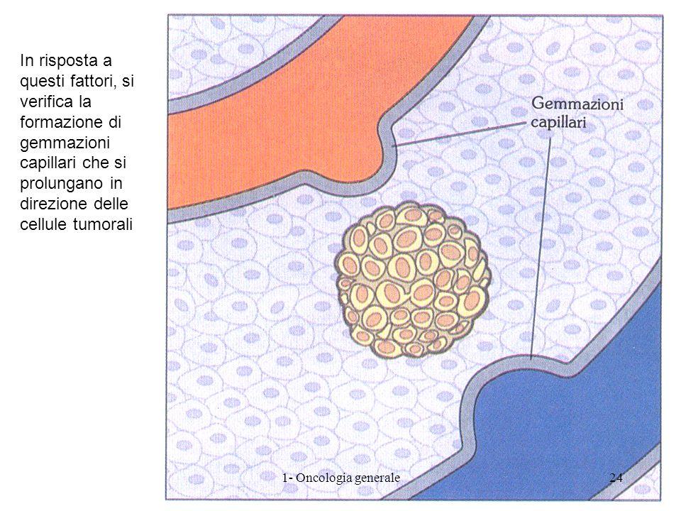 In risposta a questi fattori, si verifica la formazione di gemmazioni capillari che si prolungano in direzione delle cellule tumorali 241- Oncologia g