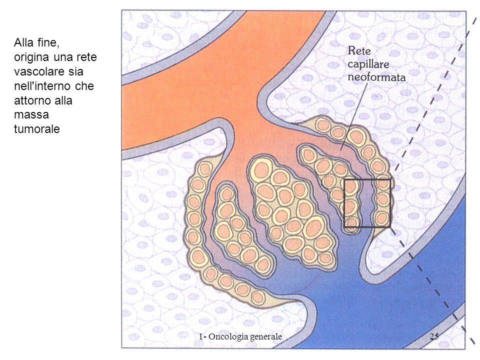 Alla fine, origina una rete vascolare sia nell'interno che attorno alla massa tumorale 251- Oncologia generale