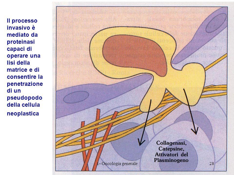 Il processo invasivo è mediato da proteinasi capaci di operare una lisi della matrice e di consentire la penetrazione di un pseudopodo della cellula n