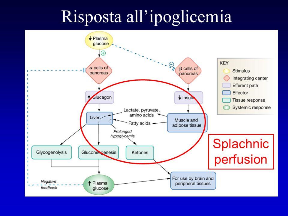 Risposta allipoglicemia Splachnic perfusion