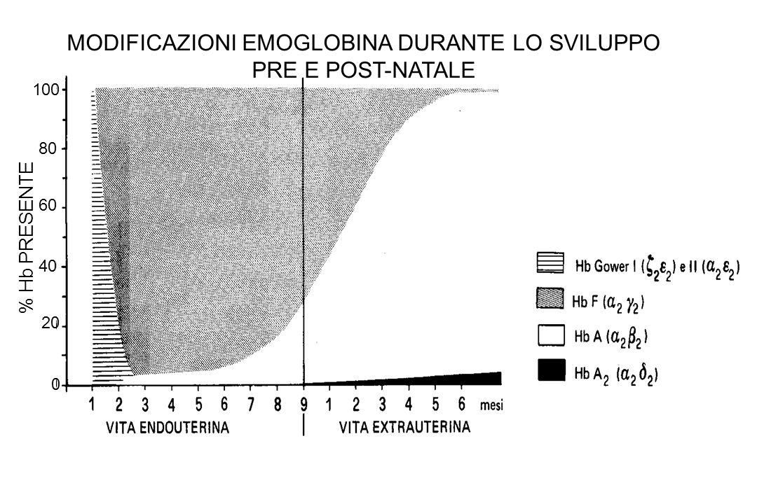 100 80 60 40 20 0 % Hb PRESENTE MODIFICAZIONI EMOGLOBINA DURANTE LO SVILUPPO PRE E POST-NATALE