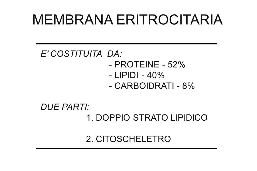 MEMBRANA ERITROCITARIA E COSTITUITA DA: - PROTEINE - 52% - LIPIDI - 40% - CARBOIDRATI - 8% DUE PARTI: 1. DOPPIO STRATO LIPIDICO 2. CITOSCHELETRO