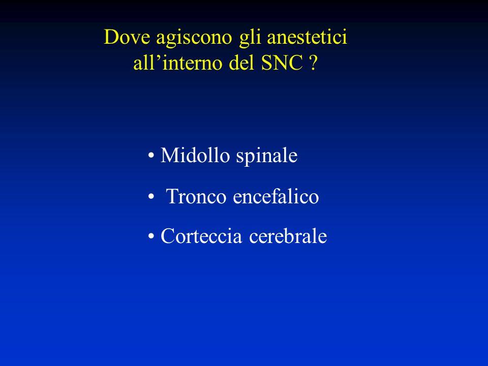 Dove agiscono gli anestetici allinterno del SNC .