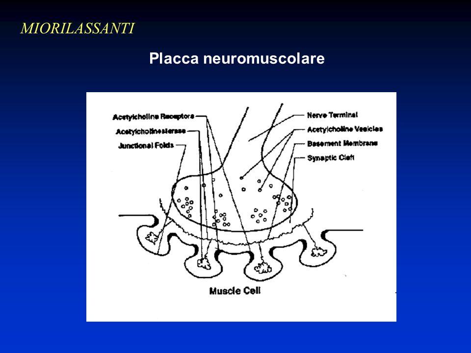 Placca neuromuscolare MIORILASSANTI Inserire foto
