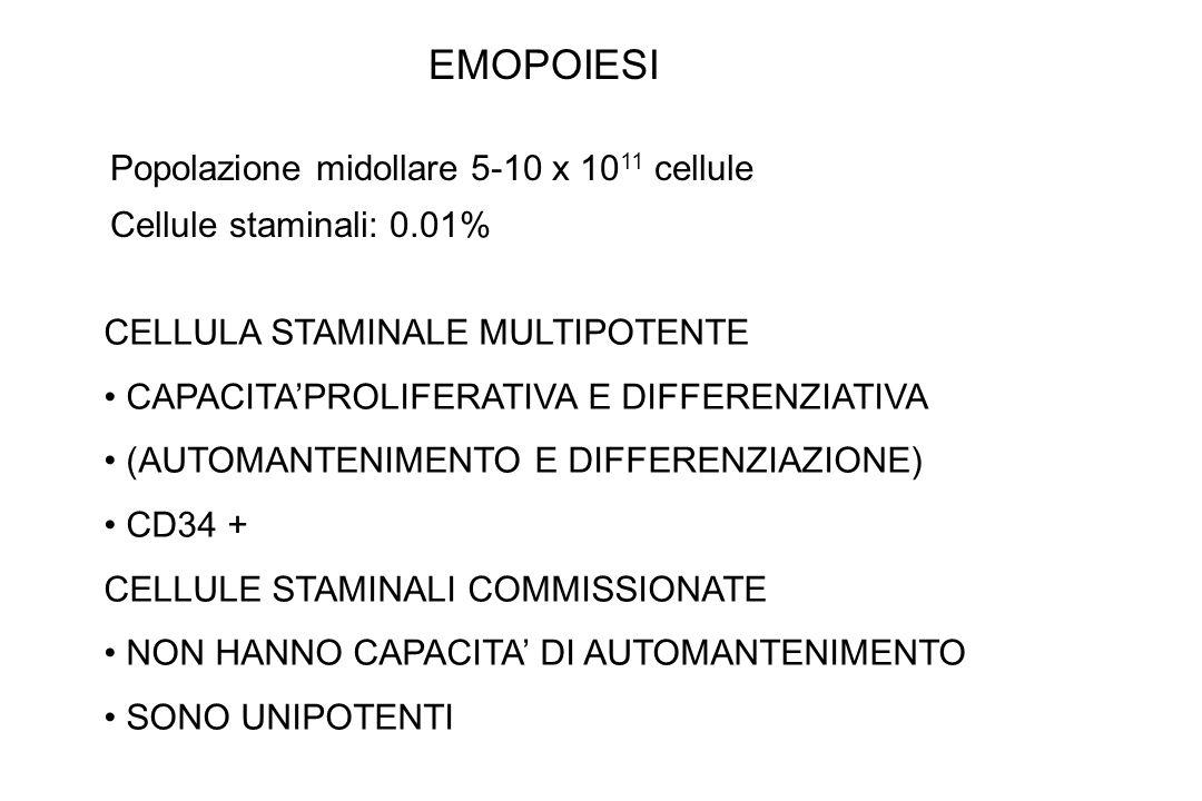 CELLULA STAMINALE MULTIPOTENTE CAPACITAPROLIFERATIVA E DIFFERENZIATIVA (AUTOMANTENIMENTO E DIFFERENZIAZIONE) CD34 + CELLULE STAMINALI COMMISSIONATE NON HANNO CAPACITA DI AUTOMANTENIMENTO SONO UNIPOTENTI Popolazione midollare 5-10 x 10 11 cellule Cellule staminali: 0.01% EMOPOIESI