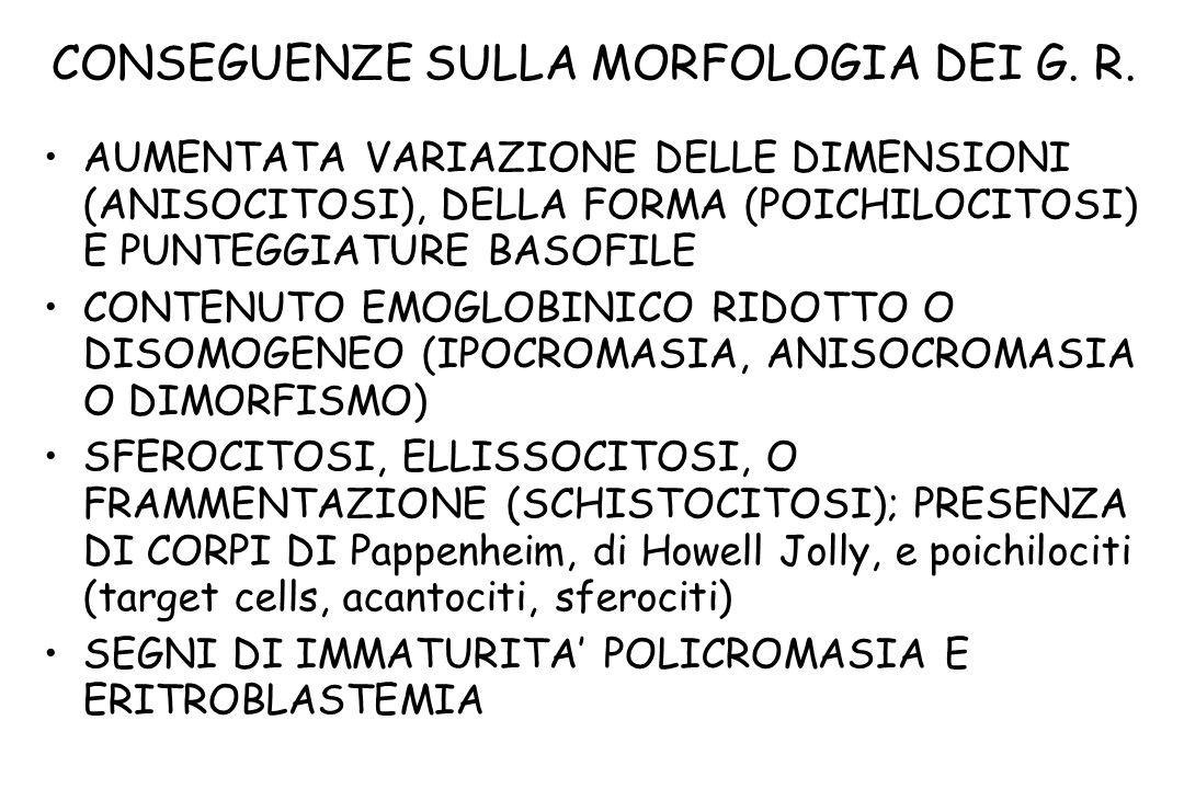 CONSEGUENZE SULLA MORFOLOGIA DEI G. R. AUMENTATA VARIAZIONE DELLE DIMENSIONI (ANISOCITOSI), DELLA FORMA (POICHILOCITOSI) E PUNTEGGIATURE BASOFILE CONT