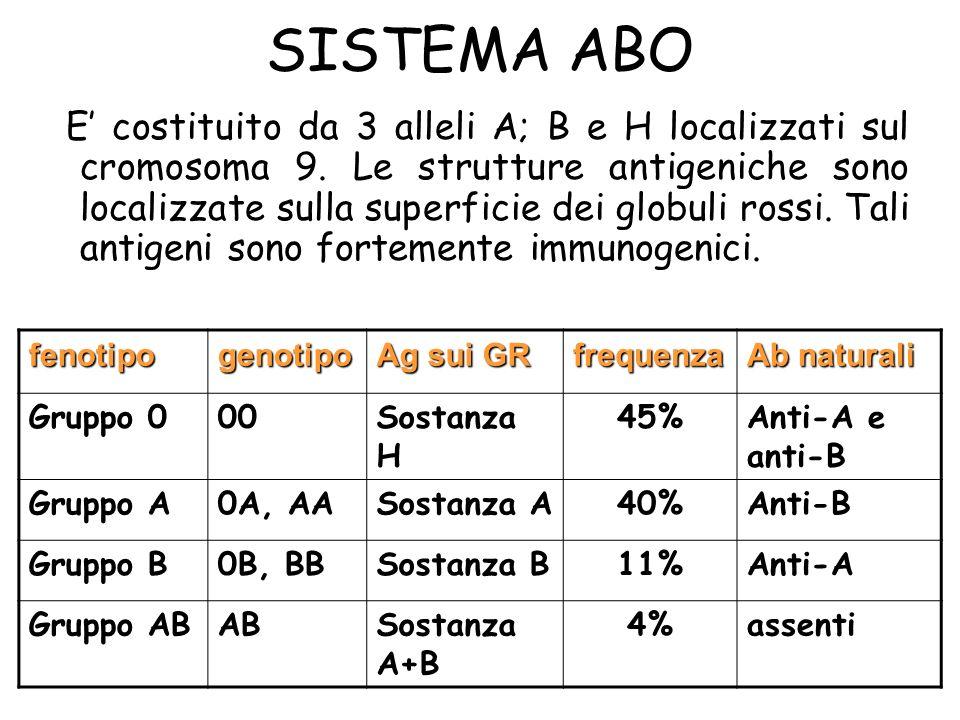 SISTEMA ABO E costituito da 3 alleli A; B e H localizzati sul cromosoma 9. Le strutture antigeniche sono localizzate sulla superficie dei globuli ross