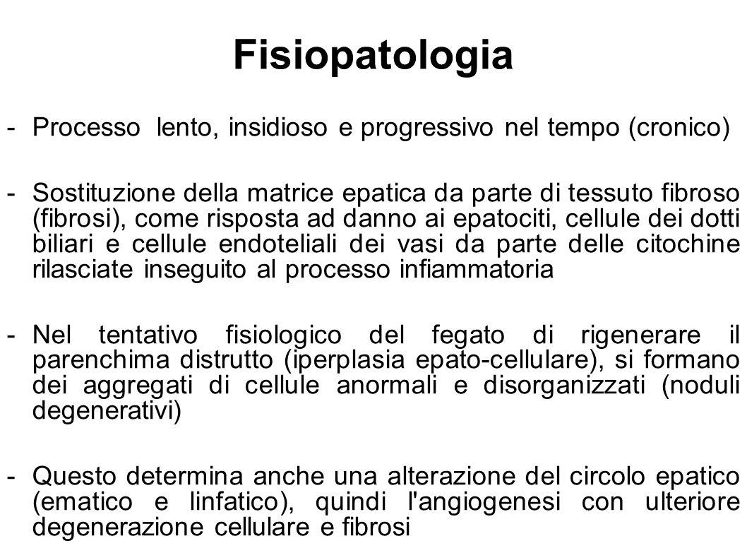 Fisiopatologia - Processo lento, insidioso e progressivo nel tempo (cronico) - Sostituzione della matrice epatica da parte di tessuto fibroso (fibrosi