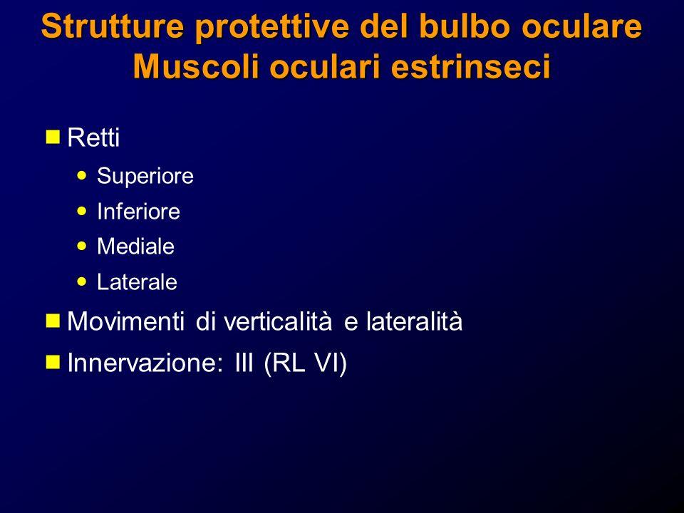 Retti Superiore Inferiore Mediale Laterale Movimenti di verticalità e lateralità Innervazione: III (RL VI)
