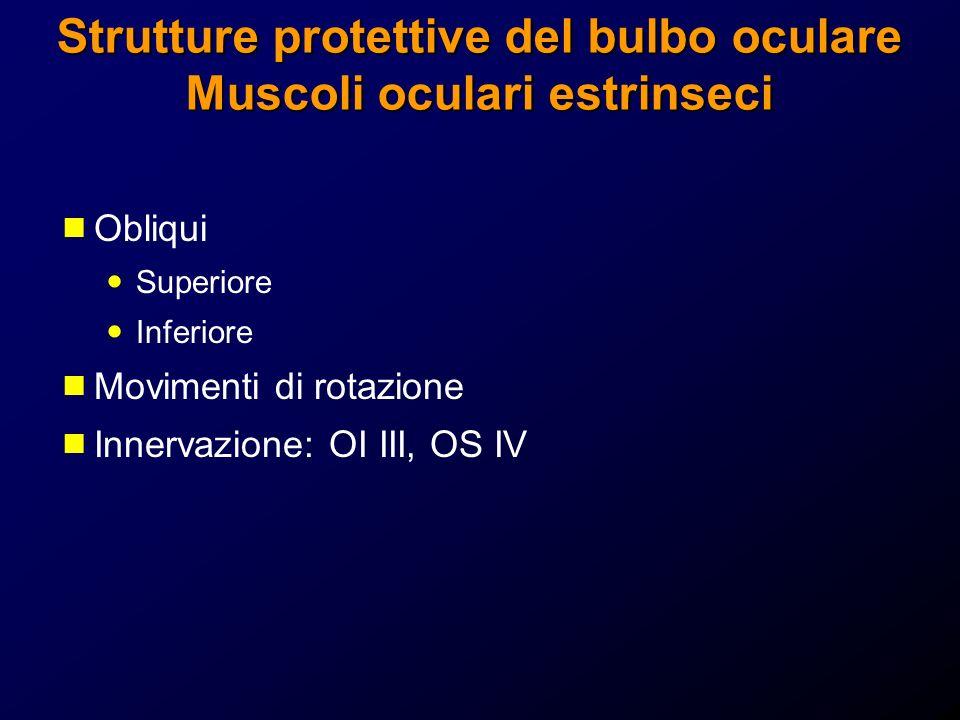 Strutture protettive del bulbo oculare Muscoli oculari estrinseci Obliqui Superiore Inferiore Movimenti di rotazione Innervazione: OI III, OS IV