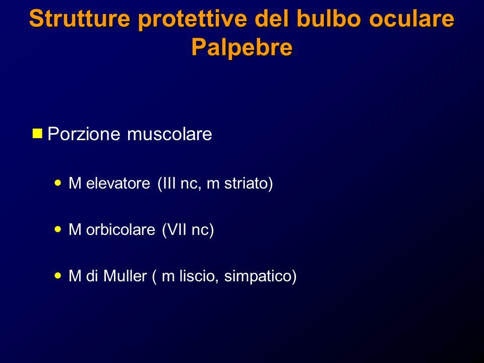 Strutture protettive del bulbo oculare Palpebre Porzione muscolare M elevatore (III nc, m striato) M orbicolare (VII nc) M di Muller ( m liscio, simpa