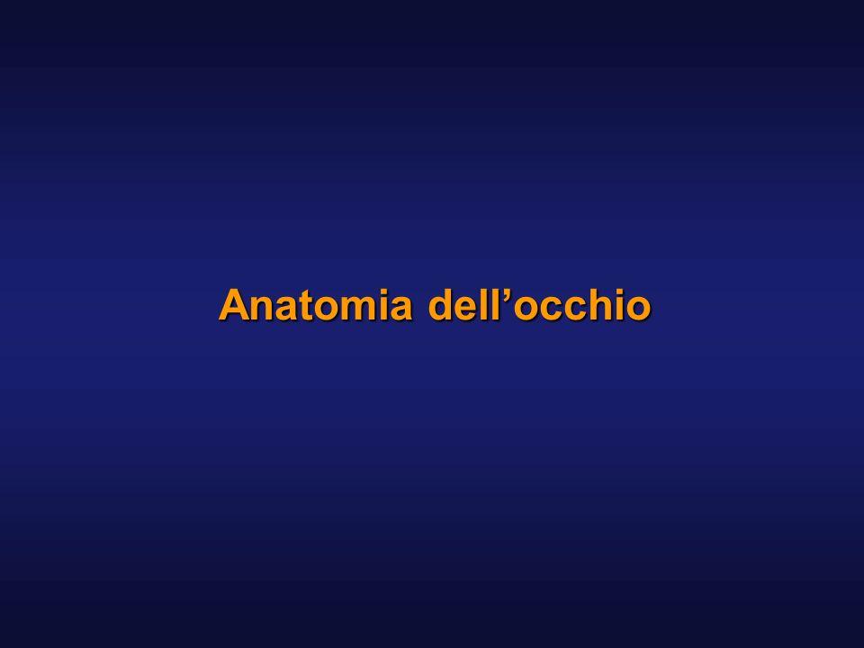 Cornea Tunica fibrosa Spessore 1 mm periferia 0.5-0.6 mm al centro Relativamente inestensibile e consistente Forma convessa