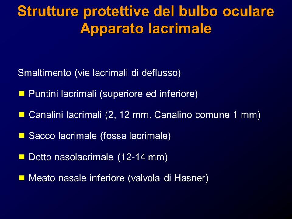 Strutture protettive del bulbo oculare Apparato lacrimale Smaltimento (vie lacrimali di deflusso) Puntini lacrimali (superiore ed inferiore) Canalini