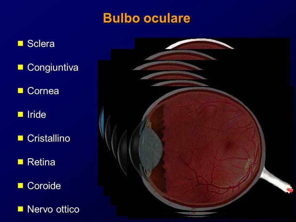 Bulbo oculare Sclera Congiuntiva Cornea Iride Cristallino Retina Coroide Nervo ottico