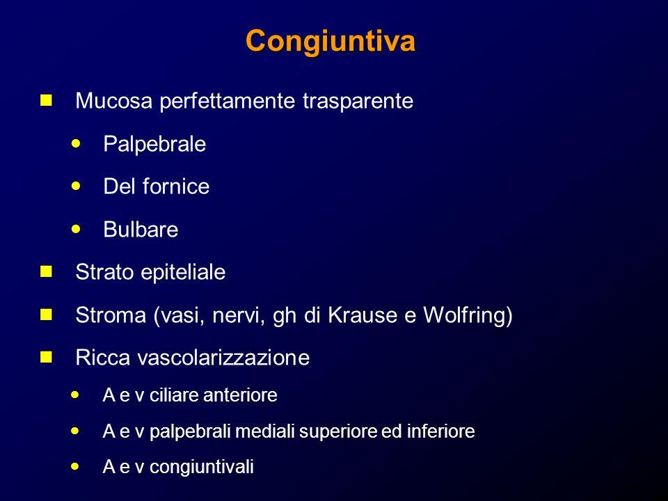 Congiuntiva Mucosa perfettamente trasparente Palpebrale Del fornice Bulbare Strato epiteliale Stroma (vasi, nervi, gh di Krause e Wolfring) Ricca vasc