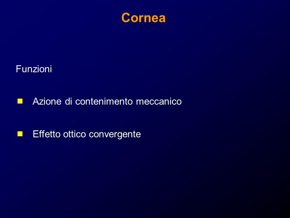 Cornea Funzioni Azione di contenimento meccanico Effetto ottico convergente