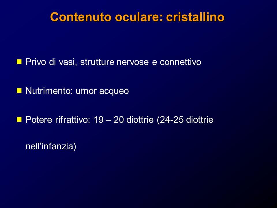 Privo di vasi, strutture nervose e connettivo Nutrimento: umor acqueo Potere rifrattivo: 19 – 20 diottrie (24-25 diottrie nellinfanzia)