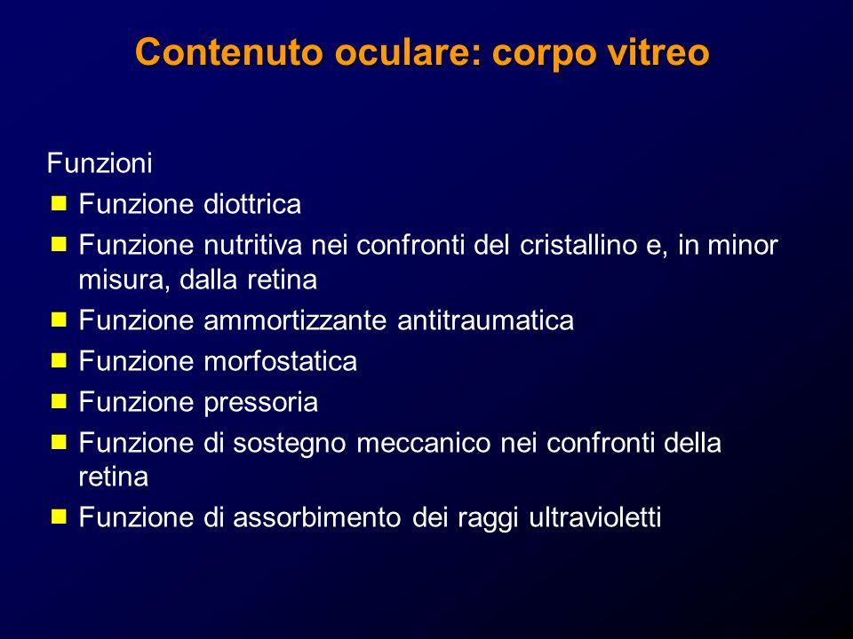 Contenuto oculare: corpo vitreo Funzioni Funzione diottrica Funzione nutritiva nei confronti del cristallino e, in minor misura, dalla retina Funzione
