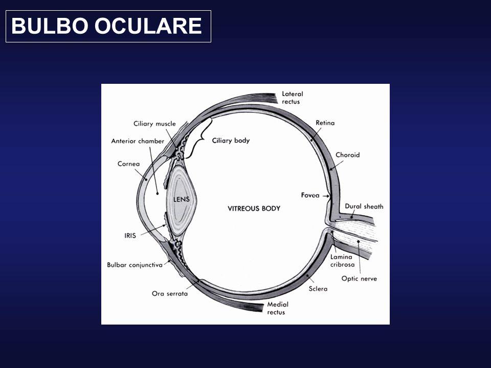 Bulbo oculare in sezione 3 tuniche: Esterna (sclera e cornea) Media Anteriore (iride e corpo ciliare) Posteriore (coroide) Interna (retina) 3 cavità: Camera anteriore Camera posteriore Camera vitrea