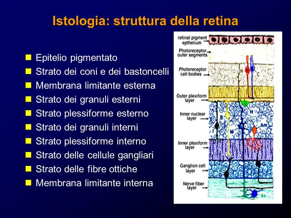 Istologia: struttura della retina Epitelio pigmentato Strato dei coni e dei bastoncelli Membrana limitante esterna Strato dei granuli esterni Strato p