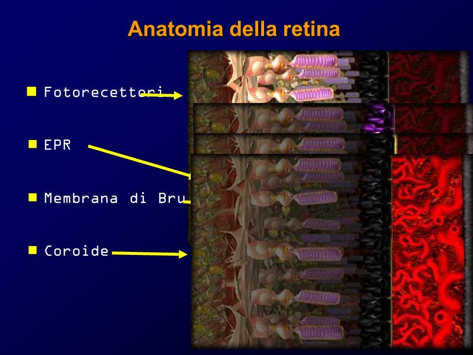 Anatomia della retina Fotorecettori EPR Membrana di Bruch Coroide