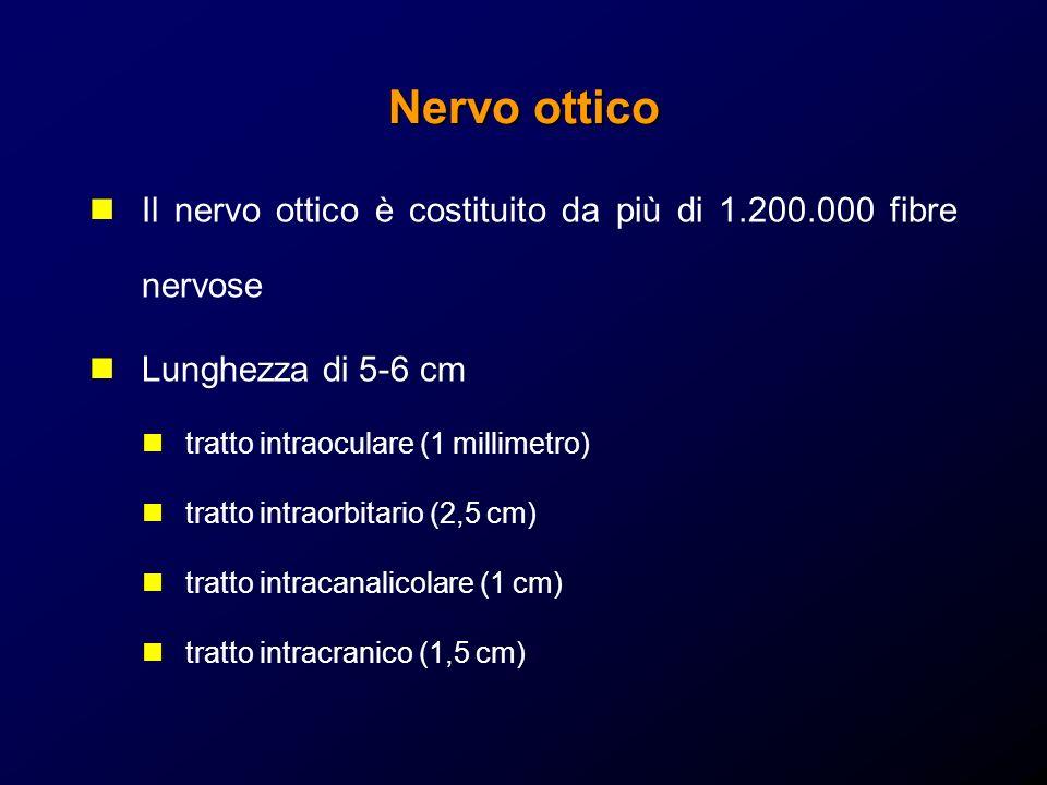 Nervo ottico Il nervo ottico è costituito da più di 1.200.000 fibre nervose Lunghezza di 5-6 cm tratto intraoculare (1 millimetro) tratto intraorbitar