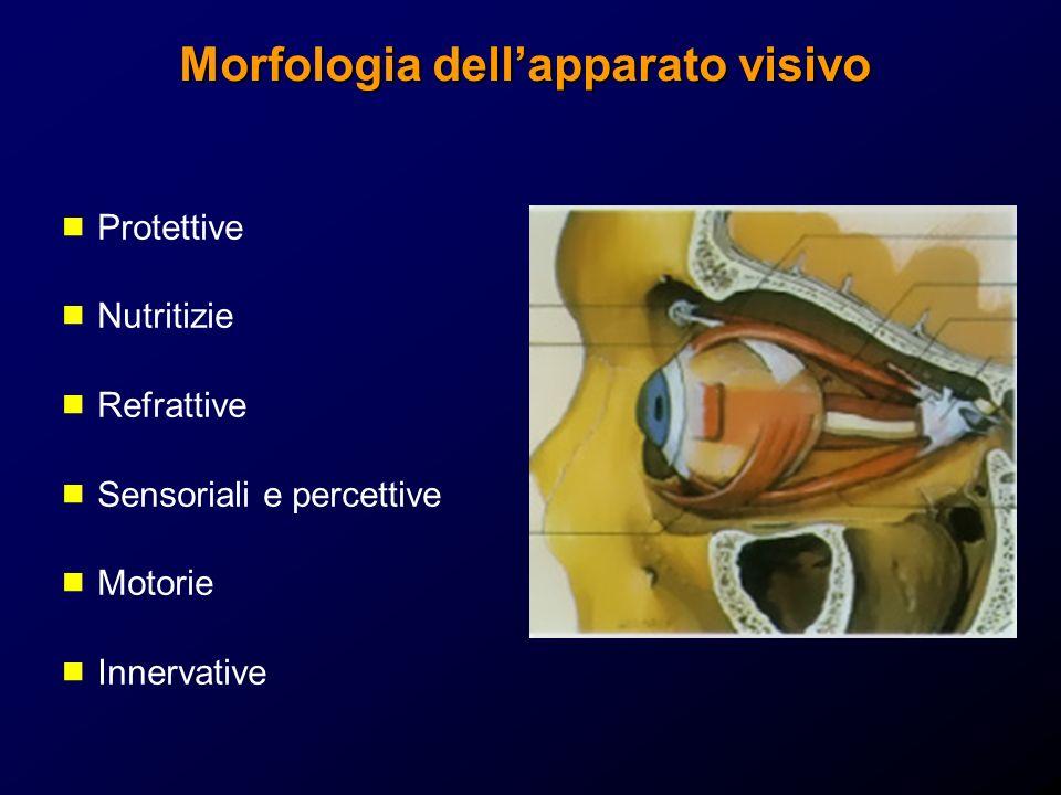 Strutture protettive del bulbo oculare Orbita E costituita da 7 ossa: sfenoide, frontale, zigomatico, mascellare, palatino, etmoide, lacrimale Piramide tronca Apice posteromediale Base anteriore