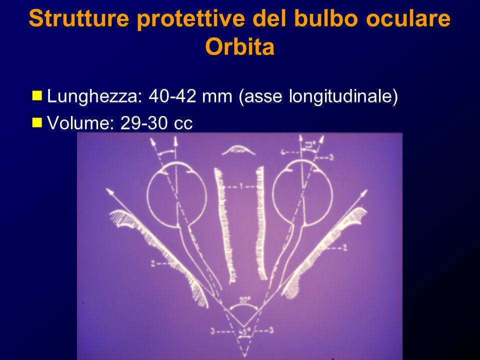 Strutture protettive del bulbo oculare Orbita Lunghezza: 40-42 mm (asse longitudinale) Volume: 29-30 cc