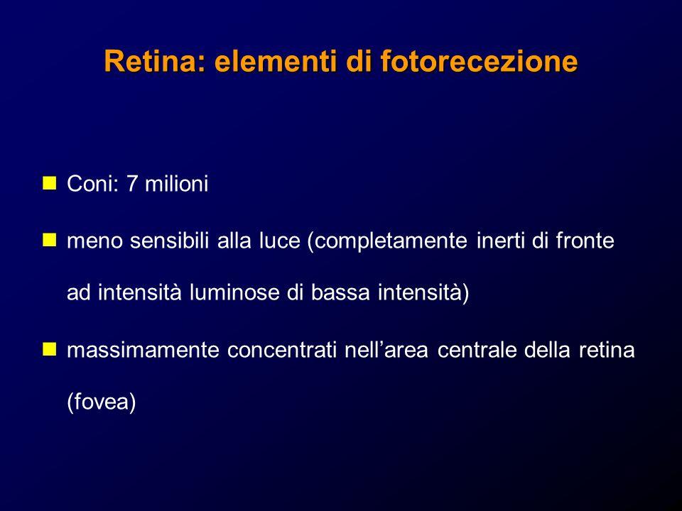 Retina: elementi di fotorecezione Coni: 7 milioni meno sensibili alla luce (completamente inerti di fronte ad intensità luminose di bassa intensità) massimamente concentrati nellarea centrale della retina (fovea)