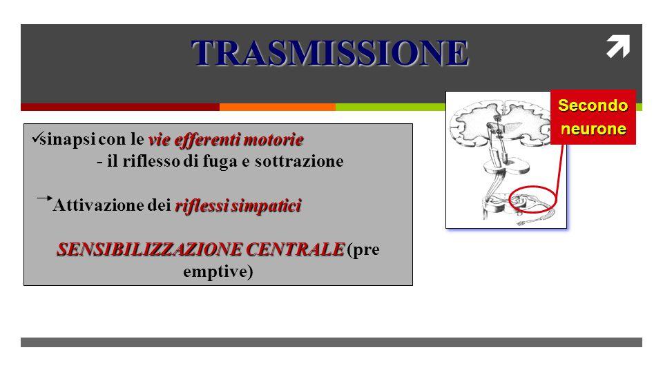 Secondoneurone vie efferenti motorie sinapsi con le vie efferenti motorie - il riflesso di fuga e sottrazione riflessi simpatici Attivazione dei riflessi simpatici SENSIBILIZZAZIONE CENTRALE SENSIBILIZZAZIONE CENTRALE (pre emptive) TRASMISSIONE