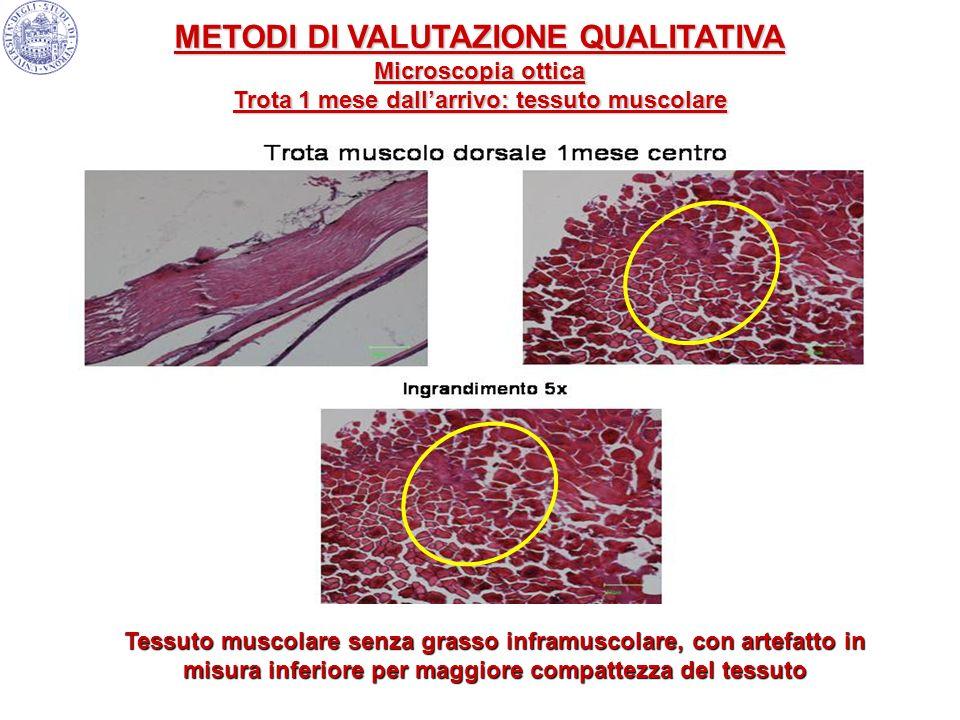 Tessuto muscolare senza grasso inframuscolare, con artefatto in misura inferiore per maggiore compattezza del tessuto METODI DI VALUTAZIONE QUALITATIV