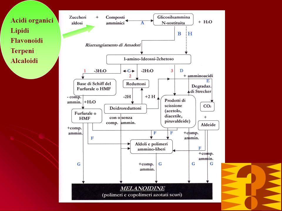 Colore Volume Polimeri complessi formati da polisaccaridi, proteine e polifenoli Sostanze volatili Anidride carbonica Caratteristiche sensoriali Caratteristiche strutturali Estraibilità Proprietà antiossidanti Altre proprietà e funzioni